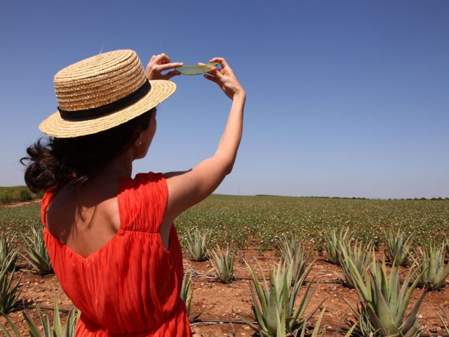 Las Coronas, Aloe Vera