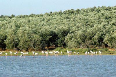 Reserva Natural Laguna de los Jarales