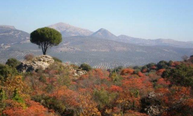 The Sumac Trail