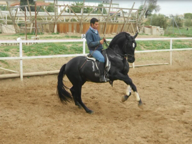 Yeguada Tamarit Campuzano