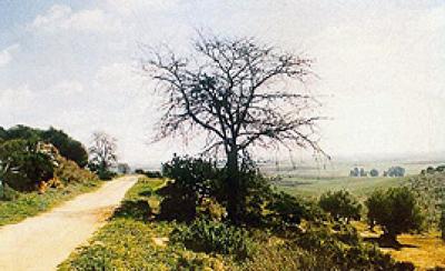 Vía Verde de los Alcores